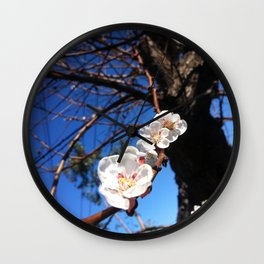 Apricot Tree in Bloom Wall Clock