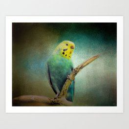 The Budgie Collection - Budgie 1 Art Print