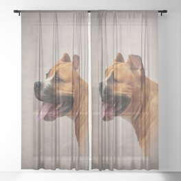 American Staffordshire Terrier 6 Sheer Curtain