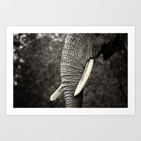 Ivory Tusks Art Print