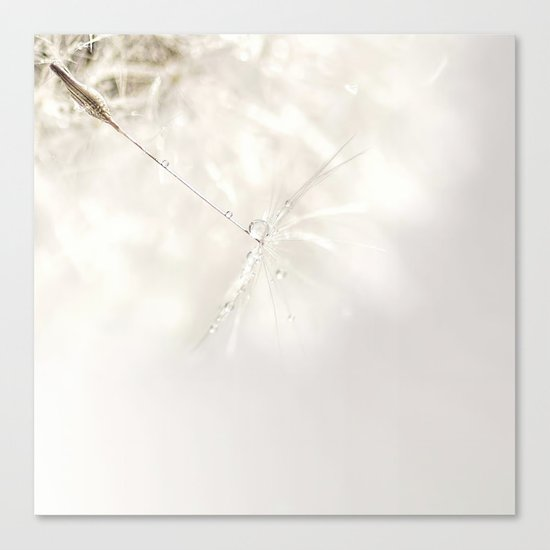 Sparkling dandelion seed head with droplet Canvas Print