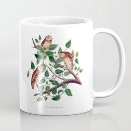 Whitney's Pygmy Owl Coffee Mug