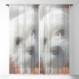 Cute Maltese asking for a treat Sheer Curtain