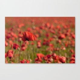 Poppy poppies summer field Canvas Print