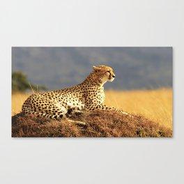 Cheetah on the hill Canvas Print