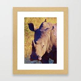 Rhino Framed Art Print