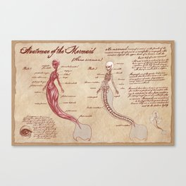 Anatomy of the Mermaid Canvas Print