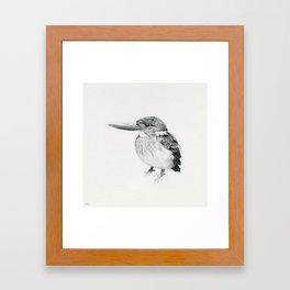 Alcedo euryzona / Blue Banded Kingfisher Framed Art Print