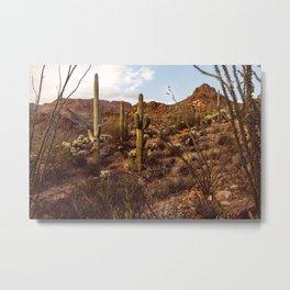 Saguaro Garden Metal Print