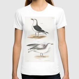 283 Great Black-backed Gull (Larus marinus) 284 Winter Gull (Larus argentatus)  from Zoology of New T-shirt