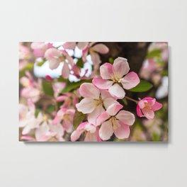 Spring Blooming Metal Print