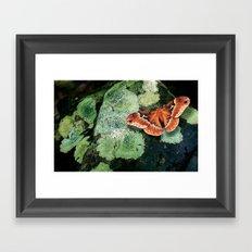 Moth on Rock Framed Art Print