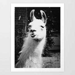 What The Llama BW Art Print