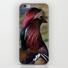 Mandarin Duck iPhone Skin