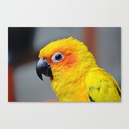 Vibrant Package Canvas Print