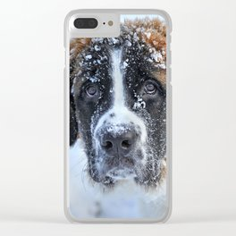 Saint Bernard In The Snow Clear iPhone Case