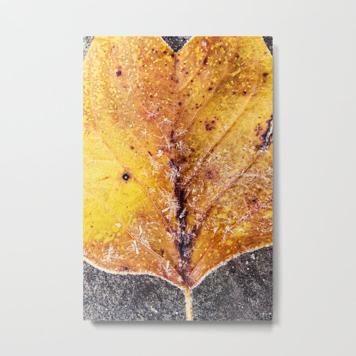 yellow and frosty Metal Print