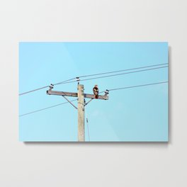 Red Tailed Hawk on Pole Metal Print