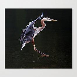 Great Blue Heron in Profile | Art | Print | Wildife | Photography Canvas Print