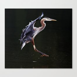 Great Blue Heron in Profile | Art | Print | Wildife | Photography Canvas Print