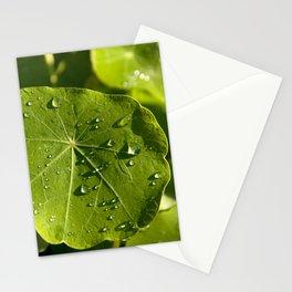 Rain drips on a nasturtium leaf Stationery Cards