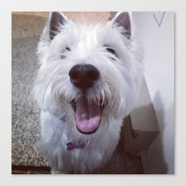 rory the westie Canvas Print