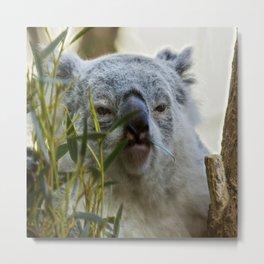 Cute, little koala bear Metal Print