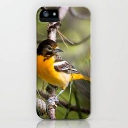 Oriole and Pine cone iPhone Case