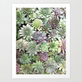 Desert Flower II Art Print