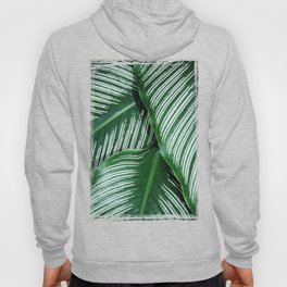 Green Tropical Leaves with White Stripes Closeup Hoody