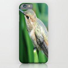 Chirp, Chirp Slim Case iPhone 6s