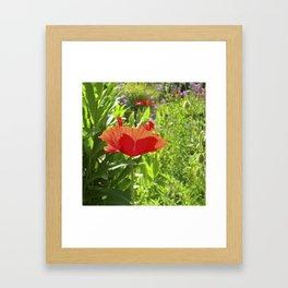 garden poppy IX Framed Art Print