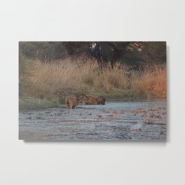 Wildlife Bathtube Time Metal Print