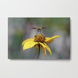 Moth on a Flower 1 Metal Print