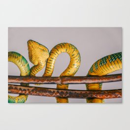 Snake pattern Canvas Print