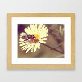 Hover Fly upon Daisy Framed Art Print