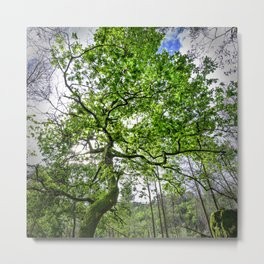 Green Oak tree Metal Print