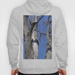 Bare Trees and Blue Skies Hoody