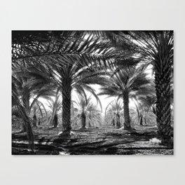 Vintage Palms Trees : Coachela Valley California 1937 Canvas Print
