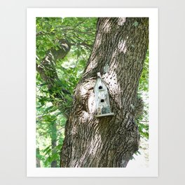 Crooked Birdhouse Crooked Tree Art Print