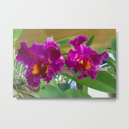 Frilly Orchids Metal Print