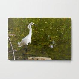 Majestic Egret  Metal Print