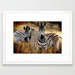 Zebra Safari Framed Art Print