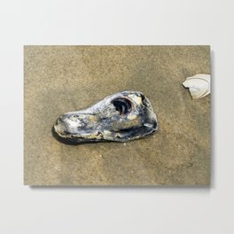 Oyster Shell Metal Print
