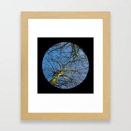 Trees from below 2 Framed Art Print