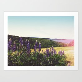 Lupine Flowers of the Maritimes Art Print