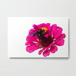 isolated bluebottle on flower Metal Print
