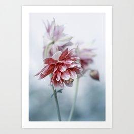 Red columbine flowers Art Print