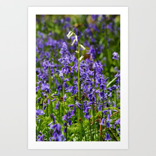 Rare White Bluebell Art Print