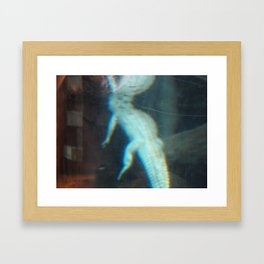 Albino Alligator 2 Framed Art Print